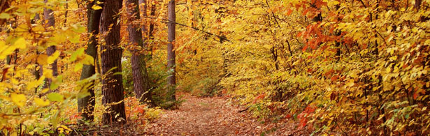 Enjoy Fall Colors in the Chippewa National Forest during your stay at McArdle's Resort